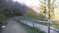Hayedo de Montegrande – Cascada del Xiblu