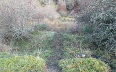 Camino de San Pelayo – Hayedo de Tendeña – Pico Yordas (1.964 m.) – Monte Burín
