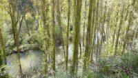 Hoces del Río Duratón – Senda de la Molinilla