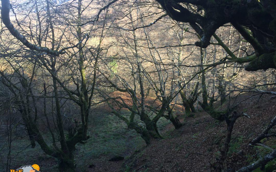 Les Bedules – Bosque de Peloño – Roblón de Bustiello