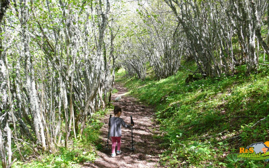 Solle – Las Biescas (Avellanar de Solle) – Pico Prado del Toro (1.451 m)
