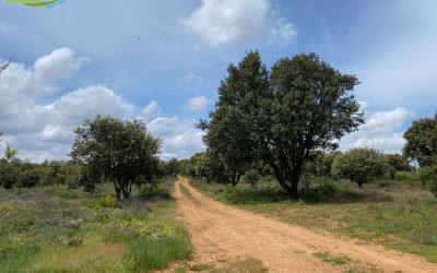 Sariegos – Camino del Monte – Camino de los Camparines – Camino de las Mulas