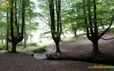 Hayedo de Otzarreta – Cascada Uguna – Humedal de Saldropo
