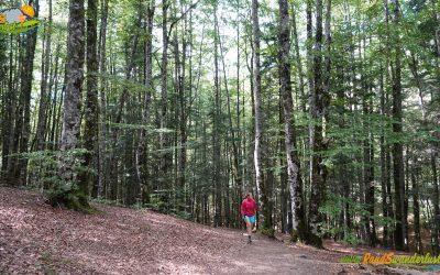 Selva de Irati – Bosque de Zabaleta – Embalse de Irabia