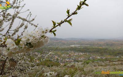 Corullón – Ruta de los Cerezos San Juan y Campelo
